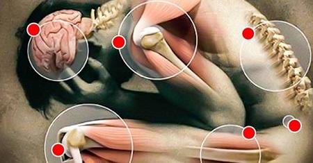 сегменты мышечного панциря