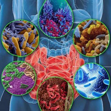 microbiota-kishechnika